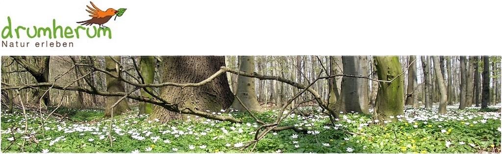 drumherum – Natur erleben.